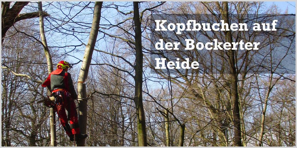Kopfbuchen auf der Bockerter Heide | treeTeacher vor Ort