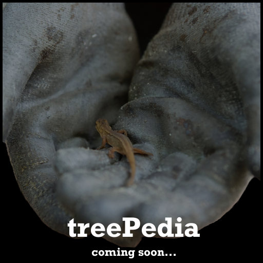 treePedia_coming soon | bald geht es los