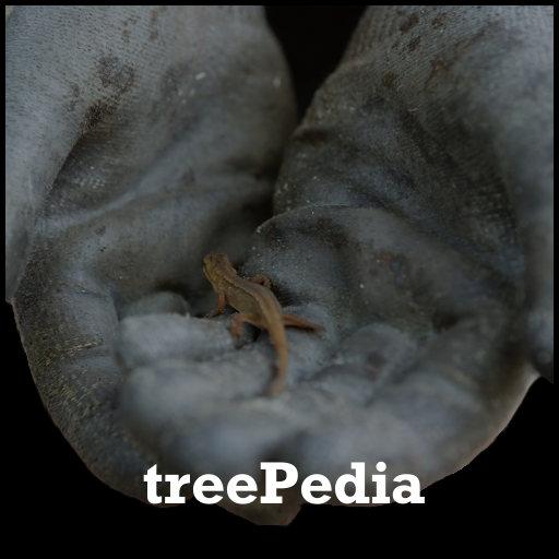 treeTeacher | treePedia - Hände halten einen Echse